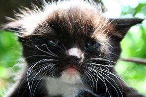 Котёнок, похожий на меня — 22.06.2008