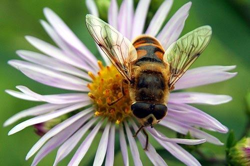 Пчела была совсем сонной — спит себе, вот и всё