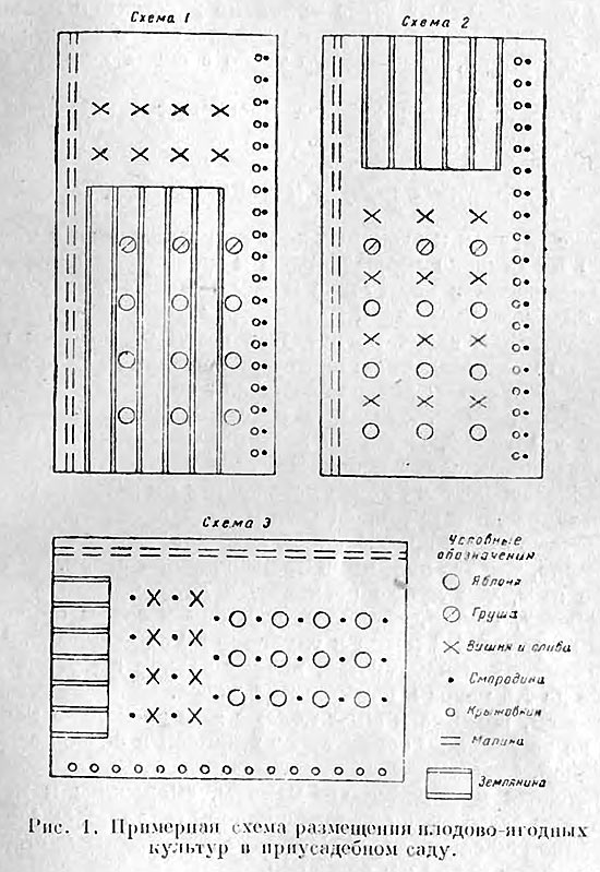 Схема расположения посадок плодово-ягодных растений — Домоводство, г. 1957