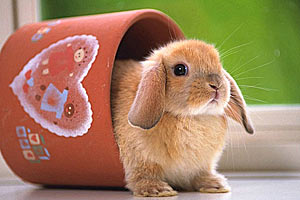 Кроличьи думки