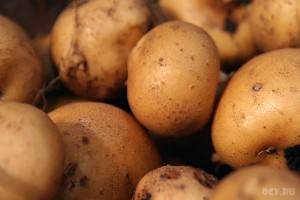 Картофель урожая 2009 года. Уже не молодой — зрелый.