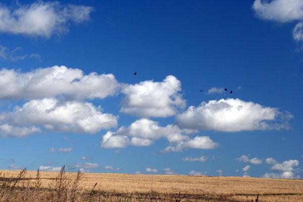 ВОроны над полем