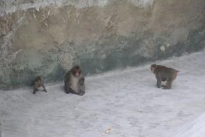 Жизнь приматов