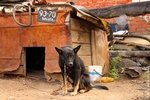 Охранная собака в будке, госномер 93-70 МНМ