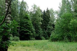 Химкинский лесопарк