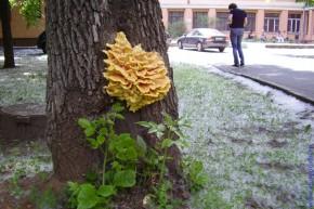 Съедобно выглядящие грибы в центре Москвы.