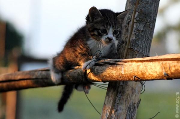 """Юный котик какбе говорит нам: """"Я смогу!"""""""