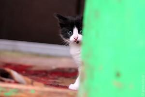 """Котик какбе говорит нам: """"И чо?"""""""