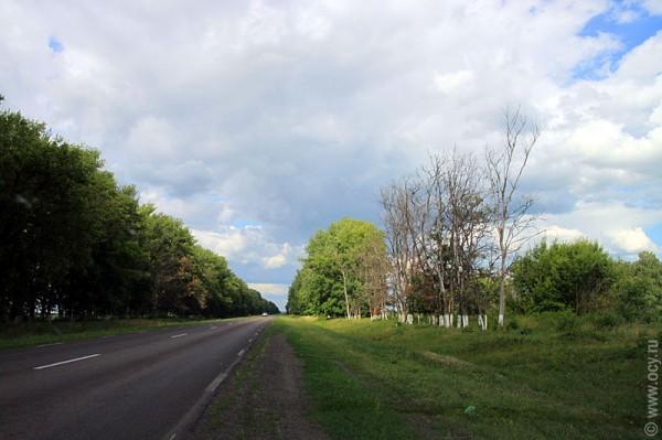 Сухие деревья с белыми стволами.