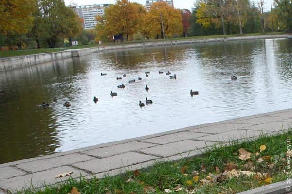 Осенью в парке. Новогиреево. 2011 год.