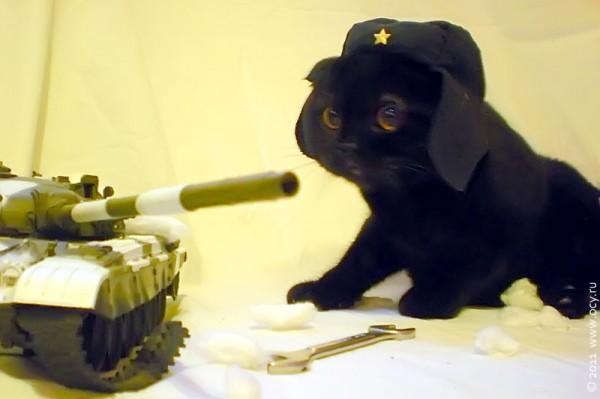Кот Эльфик смотрит на танк Т-72.