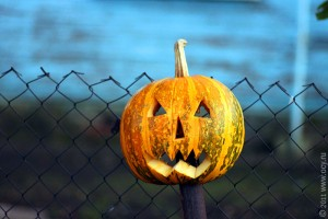 Halloween. Тыква.