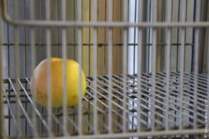 Положенное на хранение яблоко в одном из супермаркетов округа Новогиреево. Москва. 2011 год.