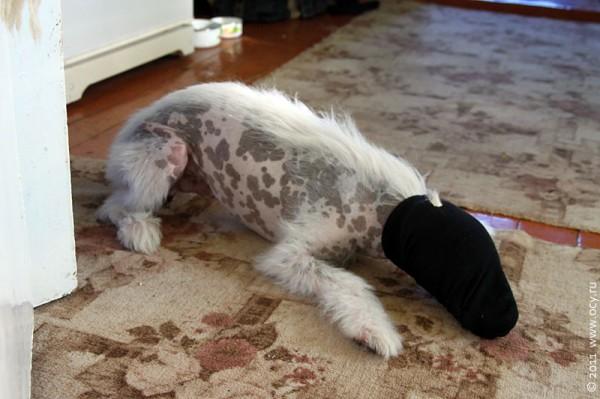 Из собаки Пифы получается прекрасный тапир.