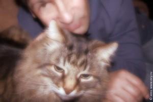 Новогодние фото с котом Степаном.
