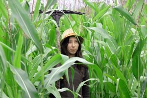 В кукурузе.