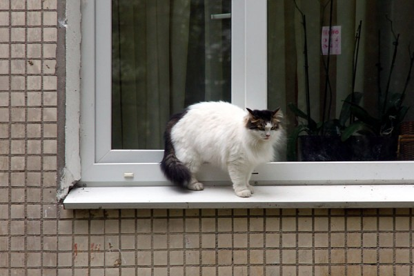 Пущинский кот.