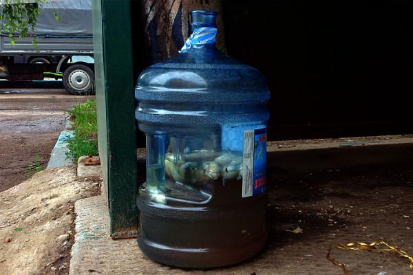 Мёртвые рыбы в бутыли для воды.
