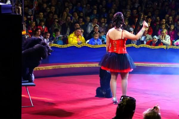 Цирк в Лобне.