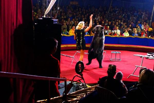 Цирк Арена. Гимнасты.