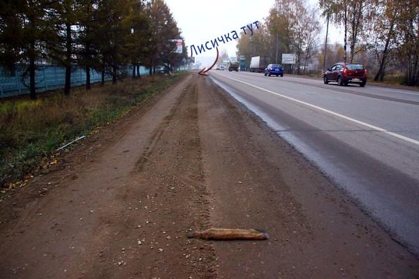 Лисиный хвост на дороге.