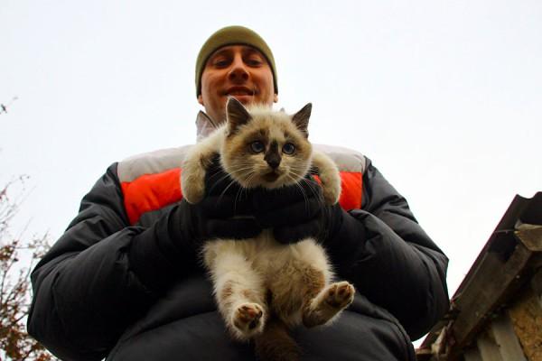 Испуганная кошка Белка.