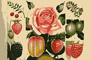 Плоды и цветы — Домоводство, г. 1957