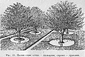Варианты полива сада — Домоводство, 1957 г.