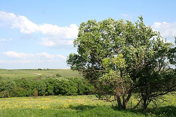 Типовой пейзаж Центрального нечерноземья. Орловская область. 2006 год.
