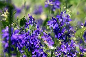 Как называются эти цветы, сказать трудно. Но не лён, это точно.