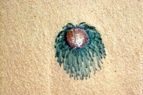 Медуза на берегу. Видела ли она Волочкову? Навряд ли. У медуз глазок нет.