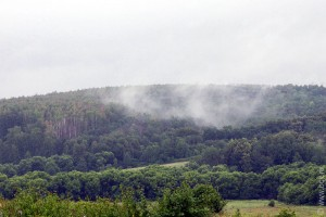 Лес после дождя.