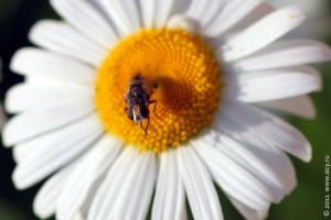 Муха, на лбу которой сидит муха.