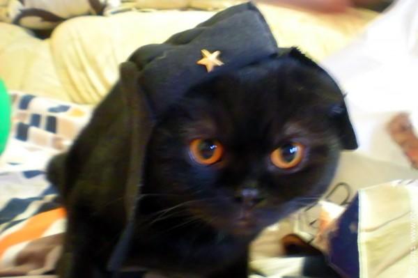 Вовин кот — танкист и дембель.