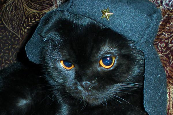 Голова кота Эльфа