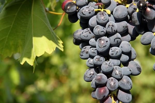 Улыбающийся виноград.
