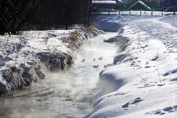 Утки в ручье.