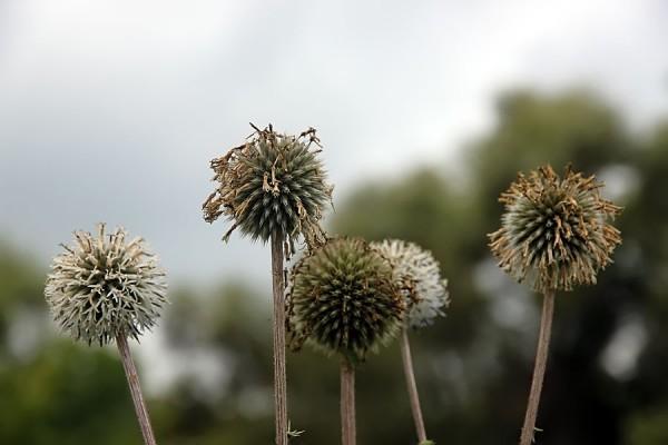Пущинские цветы.
