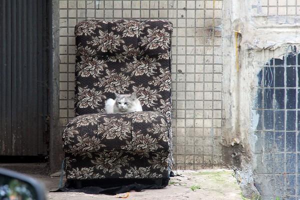 Пущинская кошка.