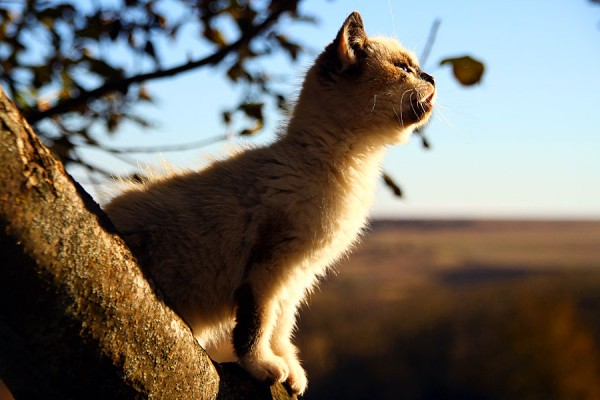 Кошка Белка.