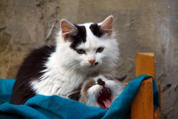 Котики Белка и Катя.