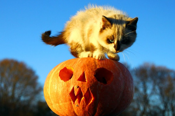 Белка на Хеллоуинской тыкве.