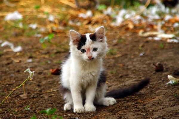 Кошка Катя.