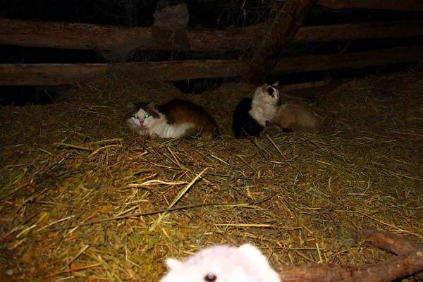 Коты на сеновале.