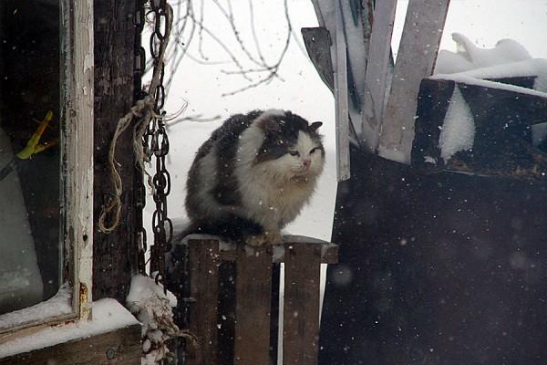 Кошка Муся.