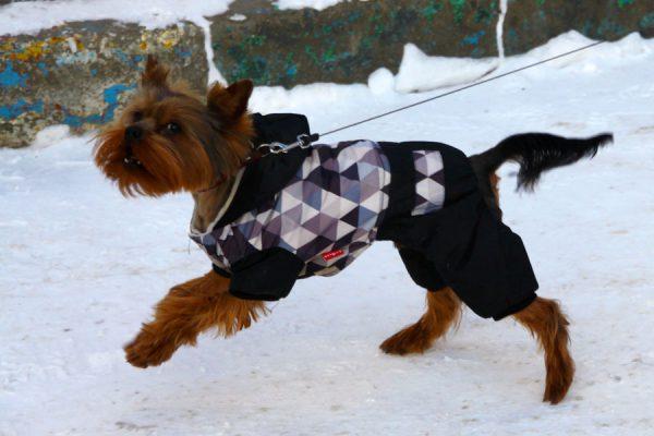 Собачка в зимнем костюме.