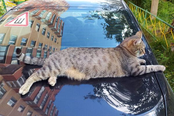 Кот из подпространства.